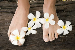 Free Woman Legs With Flowers Stock Image - 17889121