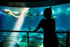 Woman with leopard shark Stock Image