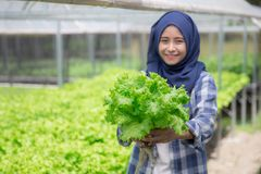 Woman with lettuce standing in hydropohonic farm stock photography