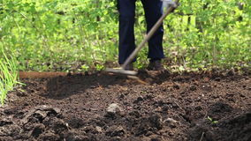 The woman leveled the soil with a rake stock video footage