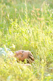 Woman lie in the park. Pretty young woman lie in the park Stock Photo