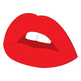 Woman lips vector illustration. Woman red lips amd teeth ,vector illustration EPS10 Royalty Free Stock Images