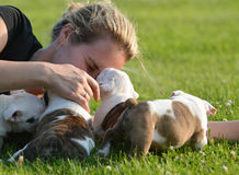 Woman and litter of puppies. Woman laying in the grass playing with litter of bulldog puppies stock image