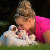 Woman and litter of puppies Royalty Free Stock Photography