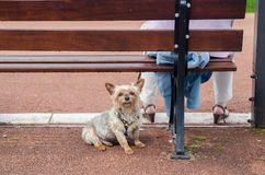 Woman with little dog sitting on bench. France royalty free stock photo