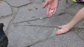 Woman and little girl feed pigeons in summer park, their hands, noface stock video footage