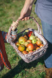 Woman and little girl holding basket with apples Stock Photos