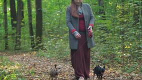 Woman with a long burgundy skirt, walks in the woods with two small dogs. Passes by the camera stock video footage