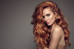 Portrait of woman with long curly beautiful ginger hair. Stock Photography