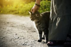 A woman in a long dress stroking a striped stray kitten stock images