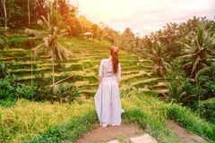 Woman in long dress enjoys rice terrace view in Bali. Indonesia Royalty Free Stock Photo