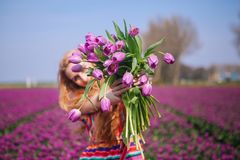 Woman with long red hair wearing a striped dress holding a bouquet of purple tulips flowers on background on purple tulip fields royalty free stock image