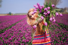 Woman with long red hair wearing a striped dress holding a bouquet of purple tulips flowers on background on purple tulip fields royalty free stock photos