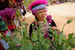 Woman look at opium. Hmong hill tribe woman look at opium flowers royalty free stock photo