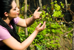Woman looking and checking new vine leaf Royalty Free Stock Photography