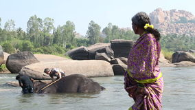 Woman looking at the elephant lying in river while being washed by two men. HAMPI, INDIA - 28 JANUARY 2015: Woman looking at Lakshmi the elephant lying in the stock video footage