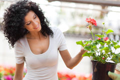 Woman looking at flowers in a green house Royalty Free Stock Images