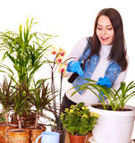 Woman looking after houseplant. At home stock image