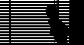 Woman looking out blinds Stock Image