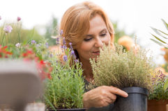 Woman Looking At Potted Plant Stock Photography