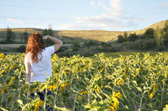 Woman looking at a sunflower field at sunset Royalty Free Stock Photography