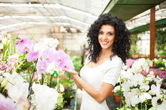 Woman looking to orchids Stock Photo