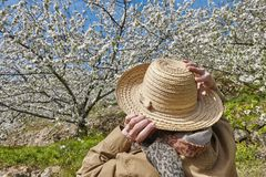 Woman looking up cherry blossom in Jerte Valley, Caceres. Spain Royalty Free Stock Photos