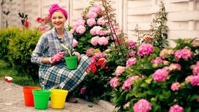 A woman looks after flowers in the summer. Smiling woman digging and watering flowers in her yard. A beautiful woman stock video footage