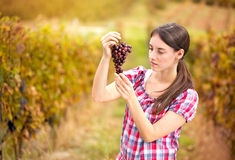 Woman looks the grapes in the vineyard Royalty Free Stock Photo