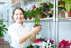 Woman looks hyacinth at flower store Royalty Free Stock Images