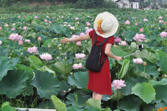 Woman in lotus pond Royalty Free Stock Photo
