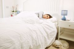 Woman lying in bed next to dog happy looking camera. Cute maltese puppy dog sleeping close to woman Royalty Free Stock Image