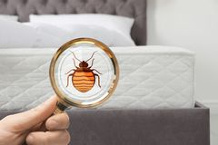 Woman with magnifying glass detecting bed bugs on mattress. Closeup royalty free stock photo