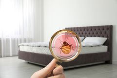 Woman with magnifying glass detecting bed bugs on mattress. Closeup stock photography