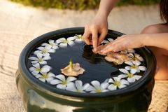 Woman makes decor arrangement in green bowl on the water of frangipani plumeria flowers. Isolated view of hands and. Woman makes spa floristic arrangement in Royalty Free Stock Photos