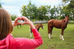 A woman makes heart with her hands and shows horses royalty free stock image