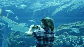 Woman makes the photo of a huge Stingray. In a big aquarium stock video