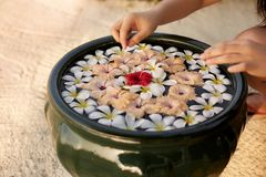Woman makes decor arrangement in green bowl on the water of frangipani plumeria flowers. Isolated view of hands and. Woman makes spa floristic arrangement in Royalty Free Stock Photo