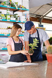 Woman making apprenticeship in nursery shop. Young women making apprenticeship in nursery shop with gardener and holding a kokedama royalty free stock photo