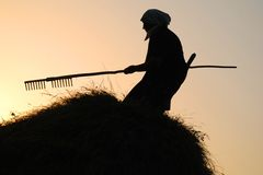Woman making hay Royalty Free Stock Photos