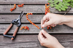Woman making heart shape decoration with rowan berry Royalty Free Stock Photos