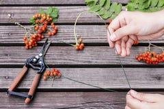 Woman making heart shape decoration with rowan berry Stock Image
