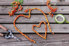 Woman making heart shape decoration with rowan berry Stock Photography
