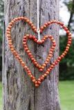 Woman making heart shape decoration with rowan berry Stock Photos