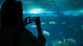 A woman making photo of the fish through the glass in the aquarium royalty free stock photo