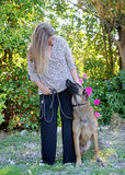 Woman and malinois. Woman and belgian shepherd malinois in a garden Stock Photos