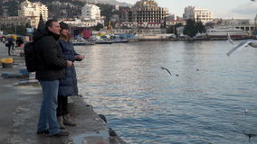 Woman and man feeding the seagulls from the shore stock footage