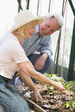 Woman and man in greenhouse planting seeds Stock Photos