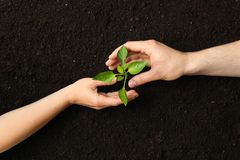 Woman and man hands hugs a green sprout in black soil, top view and space for text. Environmental protection stock photos
