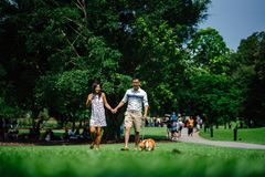 Woman and Man Holding Hands Beside Brown Dog While Walking on Green Grasses Surrounded by Green Leafed Trees royalty free stock photos